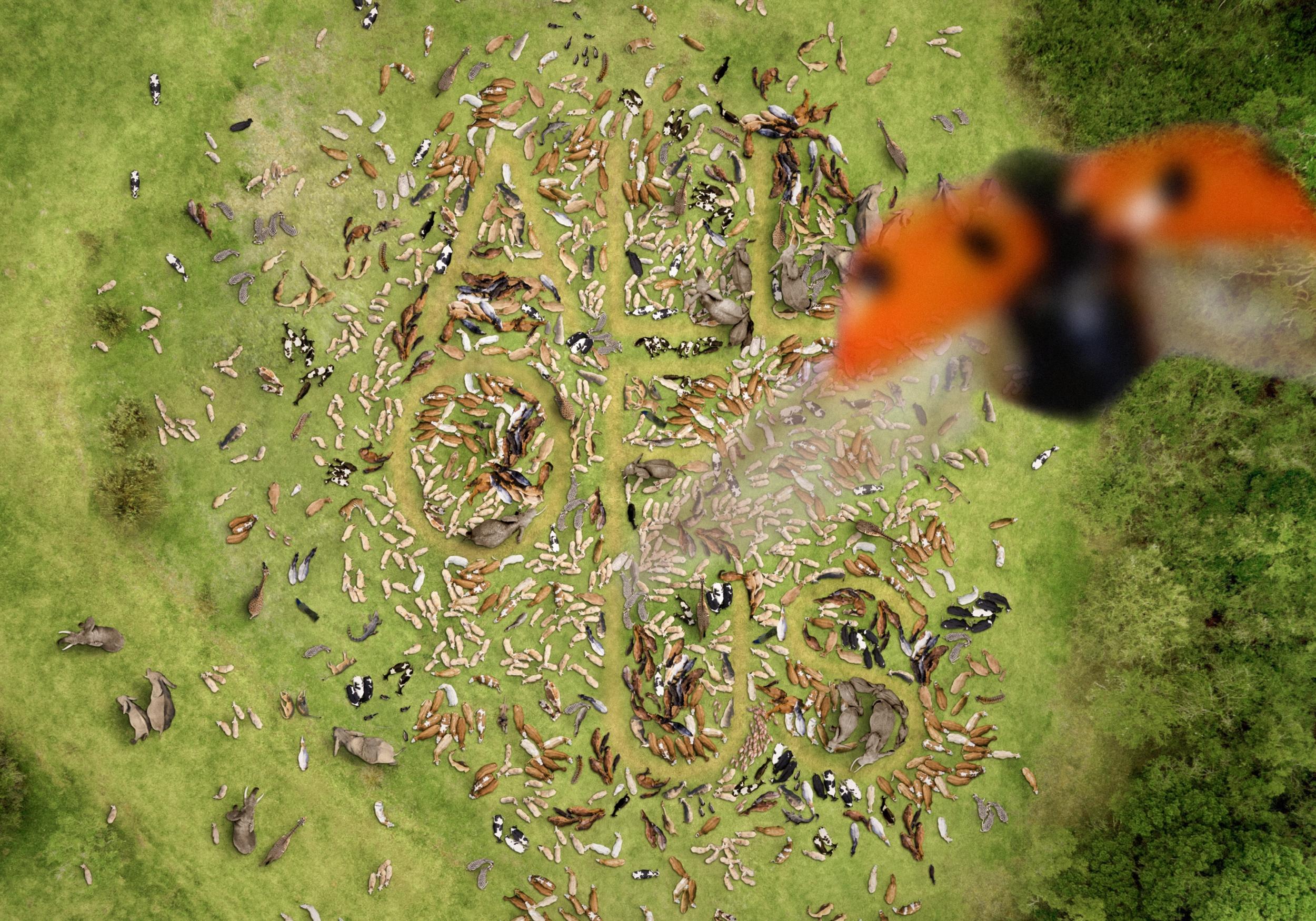 STRP 2021 Website Header 02 Animals 2500x1750